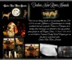 English Coonhound Breeder in HINTON, WV