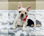 Small Photo #23  Breeder Profile in LOS ANGELES, CA, USA