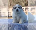 Small #46 Breeder Profile image