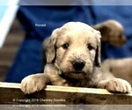 Small Photo #9  Breeder Profile in WACO, TX, USA