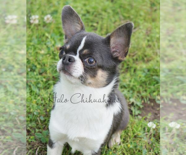 Medium Photo #15  Breeder Profile in BELLE CENTER, MO, USA