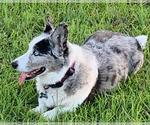 Small #51 Breeder Profile image