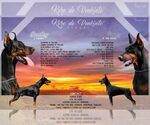 Doberman Pinscher Breeder in NEW YORK, NY