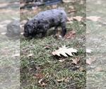 Small #37 Breeder Profile image