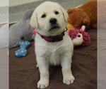 Small #4 Breeder Profile image