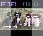 Small #48 Breeder Profile image