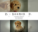 Small Photo #10  Breeder Profile in LISBON, OH, USA