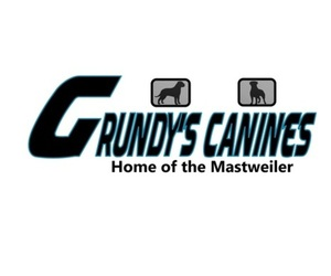 Bullmastiff Dog Breeder near MORGANTOWN, PA, USA
