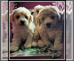 Small Photo #15  Breeder Profile in LISBON, OH, USA