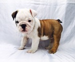 Bulldog Breeder in MABLETON, GA, USA