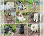 Small Photo #5  Breeder Profile in STKN, CA, USA