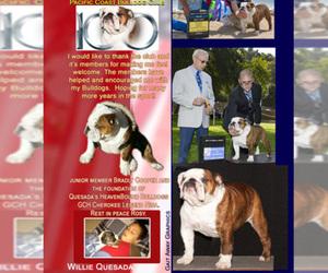 Bulldog Dog Breeder in ORANGE,  USA