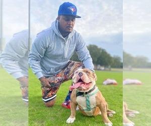 American Bully Mikelands  Dog Breeder near BAYONET POINT, FL, USA