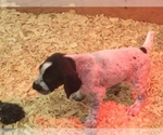 Small Photo #11  Breeder Profile in PARSONS, KS, USA