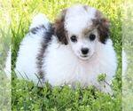Small #3 Breeder Profile image