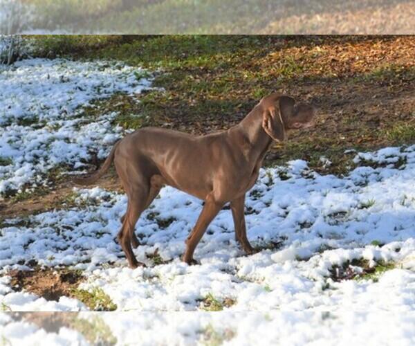 Medium Photo #1  Breeder Profile in MILLBROOK, AL, USA