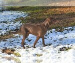Vizsla-Weimaraner Breeder in MILLBROOK, AL, USA
