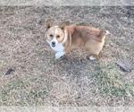 Small #2 Breeder Profile image