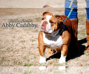 Bulldog Breeder in ARDMORE, OK