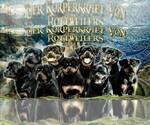 Rottweiler Breeder in MCDONOUGH, GA, USA