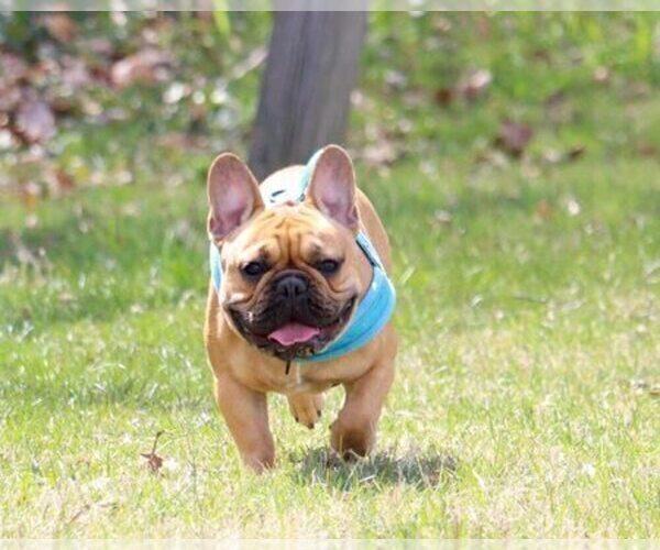 Medium Photo #11  Breeder Profile in ROCKVILLE, MD, USA