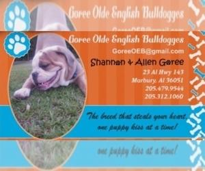 Olde English Bulldogge Dog Breeder in MARBURY,  USA