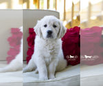 Small #22 Breeder Profile image