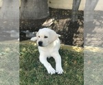 Small Photo #18  Breeder Profile in GLENDALE, CA, USA