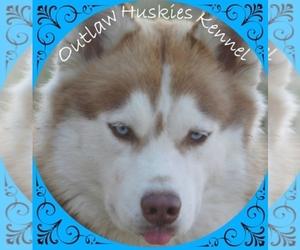 Siberian Husky Breeder in QUINLAN, TX