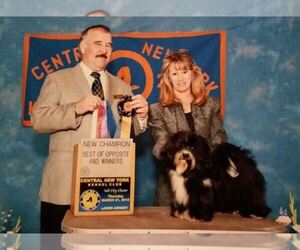 Havanese Breeder in OSWEGO, NY, USA