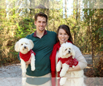 Coton de Tulear Breeder in YELM, WA, USA