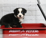 Small Photo #1  Breeder Profile in STAFFORD, VA, USA