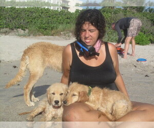 Golden Retriever Dog Breeder in PORT SAINT LUCIE,  USA