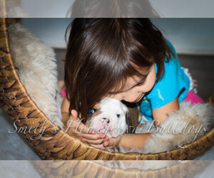 English Bulldog Dog Breeder in CARY,  USA
