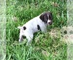 Small Photo #8  Breeder Profile in PARSONS, KS, USA