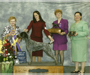 Main photo of German Shorthaired Pointer Dog Breeder near EDMONDS, WA, USA