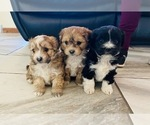 Small Photo #4  Breeder Profile in BLACK FOREST, CO, USA