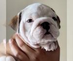 Small #97 Breeder Profile image