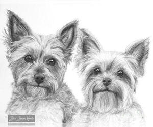 Yorkshire Terrier Dog Breeder in KELLY,  USA
