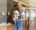 Small Photo #13  Breeder Profile in GLENDALE, CA, USA