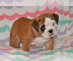 Small #58 Breeder Profile image