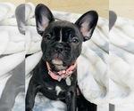 Small #8 Breeder Profile image