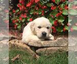 Small #42 Breeder Profile image
