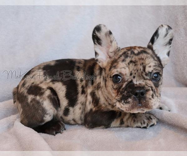 Medium Photo #8  Breeder Profile in BELLE CENTER, MO, USA