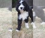 Small #15 Breeder Profile image