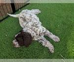Small Photo #9  Breeder Profile in AGUA DULCE, CA, USA