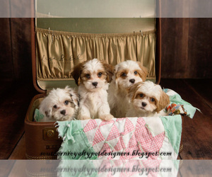Main photo of Cavaton Dog Breeder near LEBANON, TN, USA