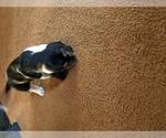Basset Hound Breeder in PICKEREL, WI, USA