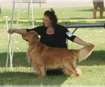 Golden Retriever Breeder in MOAPA, NV, USA