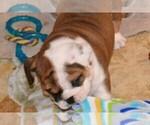 Small #44 Breeder Profile image